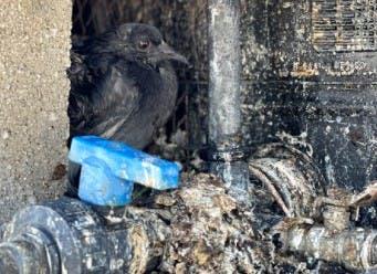 Los cubos de concreto que resguardan los tinacos son los escondites preferidos de las palomas; algunas terminan muertas dentro de los contenedores de agua.